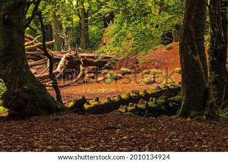 Scene in a forest park, big fallen tree, old stone bridge covered with moss, Warm sunrise light . Barna woods, Galway city, Ireland Stock fotó ©