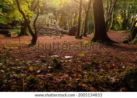 Scene in a forest park big fallen tree, red color ground, Warm sunrise light . Barna woods, Galway city, Ireland Stock fotó ©
