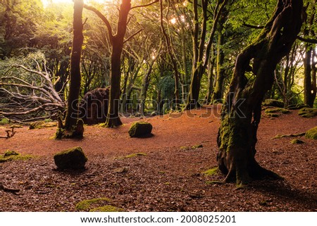 Scene in a forest park, Green trees and red color ground. Warm sunrise light . Barna woods, Galway city, Ireland Stock fotó ©