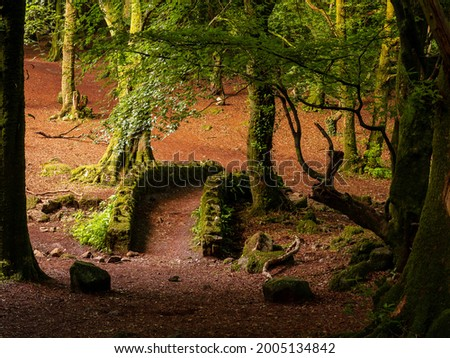 Scene in a forest park, small walking path and old stone bridge covered with moss, Warm sunrise light . Barna woods, Galway city, Ireland Stock fotó ©
