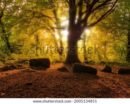 Scene in a forest park, Warm sunrise light lights up leaves. Surreal atmosphere. Barna woods, Galway city, Ireland Stock fotó ©