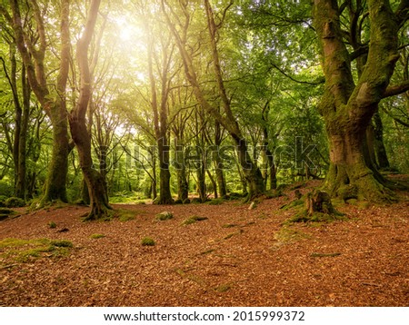 Scene in a forest park, Warm sunrise light shines though the tree branches. Barna woods, Galway city, Ireland Stock fotó ©