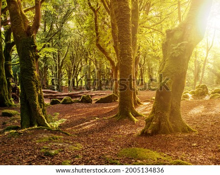 Scene in a forest park, Warm sunrise light, sun flare shines though the tree branches. Barna woods, Galway city, Ireland Stock fotó ©