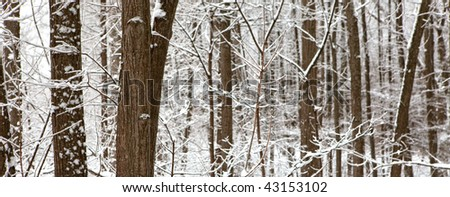 Scene in the cold winter forest.