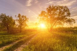 Scene of beautiful sunset or sunrise in a summer field with willow trees and grass. Landscape.