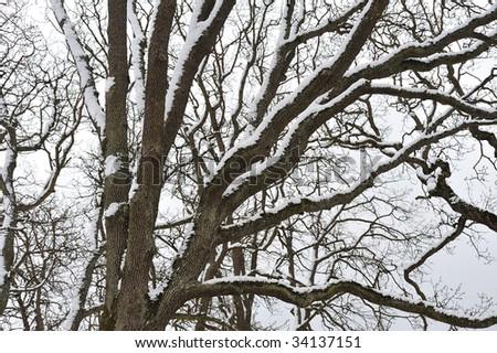 Scene of snow covered trees in winter beacon hill park, victoria, british columbia, canada