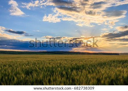 Scene of sunset on the field with young rye in the summer with a cloudy sky. Landscape. #682738309