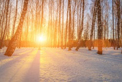 Scene of sunset or dawn in a winter birch forest on a clear frosty day. Tree branches covered with snow and hoarfrost.