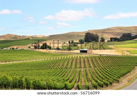 Scene of vineyard field in napa valley