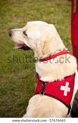 scene on a dog meeting sept. 2009 in kiel, germany - stock photo