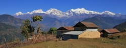 Scene on the way to Ghale Gaun, Nepal. Houses and fig tree in front of snow capped mountains. Manaslu range.