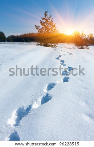 scene with pathway in winter forest
