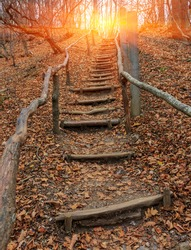 scene with wooden stairs in autumn forest