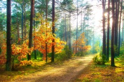 Scenery autumn forest. Sunny woodland. October nature landscape. Beautiful bright forest in sunlight.