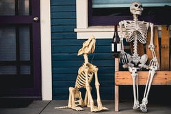 Scenery for Halloween in October. Decoration in the yard. The owner of the house and his dog skeletons. Friendship after death
