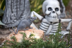 Scenery for Halloween in October. Decoration in yard. Mouse and skeleton in the grave