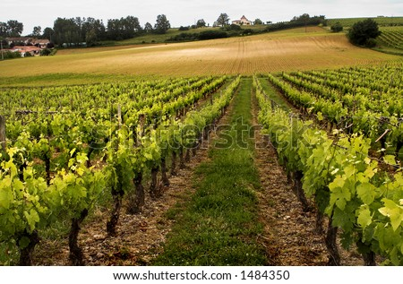 Scenery in the Lot-et-Garonne region in France, vineyard