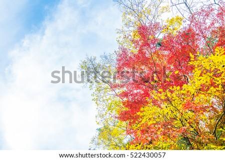 Scenery of autumn leaves - Shutterstock ID 522430057