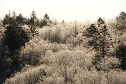 Scenery of Hokkaido forest in winter, trees are covered by snow.