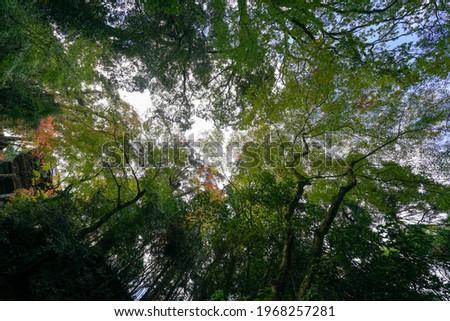 Scenery of Jingoji Temple where the trees have begun to color Zdjęcia stock ©