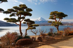 Scenery of snow capped Mount Fuji under blue clear sky, viewed from a Japanese garden by Lake Kawaguchiko with bonsai-like manicured pine trees in foreground on a sunny winter day, in Yamanashi, Japan