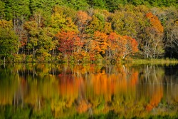 Scenery of the autumn lake, the colorful  forest reflected on the water like a mirror, in the morning sunlight