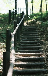Scenery of the stairs in the forest with railings