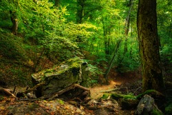 Scenery of Wolski Forest in Krakow in Poland. View of the legendary rocky and wooded gorge. Beautiful limestone rocks in the middle of a green woods. A lone limestone boulder in the middle of a green