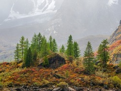 Scenery with edge coniferous forest and rocks in light mist. Atmospheric green forest landscape with firs in mountains. View to conifer trees and rocks in light haze. Mountain woodland