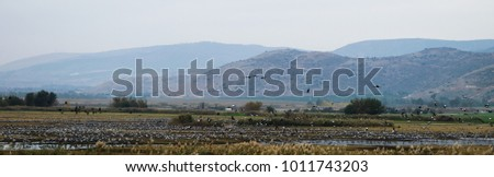 Scenes from Hula Valley #1011743203