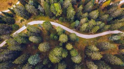 Scenic aerial view of a winding trekking path in a forest. Trekking path in the forest from above, drone view. Aerial top view of a trail in the middle of a forest. Aerial view of footpath in forest.