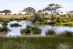 Scenic afternoon light in African swamps  Tanzania  Africa