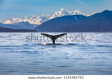 Scenic Alaskan landscape with a whale tail in the foreground