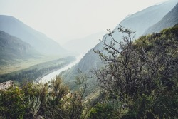 Scenic alpine landscape with beautiful thickets and wild vegetations on rocks on background of mountain river and mountains silhouettes in blur. Atmospheric mountain scenery with wild flora on cliff.