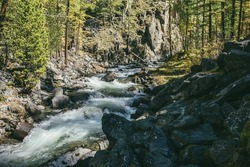 Scenic alpine landscape with powerful mountain river in forest among rocks in sunshine. Vivid autumn scenery with beautiful river in mountains in sunny day. Rapids on turbulent river near rocky wall.
