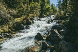 Scenic alpine landscape with powerful mountain river in wild forest in sunshine. Vivid autumn scenery with beautiful river among trees and thickets in sunny day. Splashes on rapids of turbulent river.