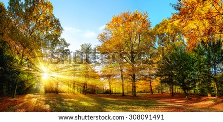 Scenic autumn panorama with the sun shining through the gold foliage and illumining the forest landscape