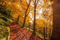 Scenic autumn road leading to the castle of Brescia. Lombardy, italy