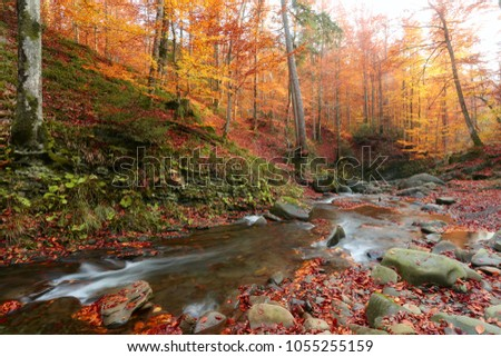 scenic dawn landscape, river in gold sunlight autumn forest, amazing colorful scenery ,red falled leaves on big stones near fast stream,   west Europe, wallpaper background image