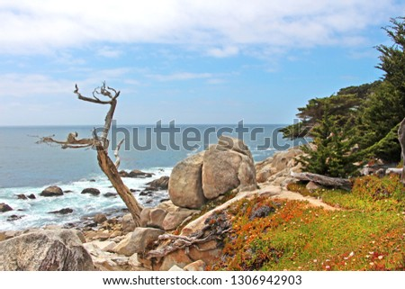 scenic drive starting in Monterey, California. The view on the sea shore and rocky cliff covered with colorful red and green plants. Crooked dead tree, cloudy sky.