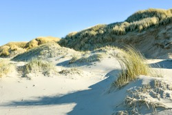 Scenic Dune grass on the beach in the Netherlands. The blades of grass are free, the background is blurry. Hard shadows in the beach.
