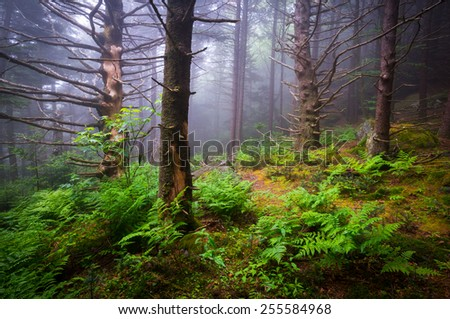Scenic Forest Hiking Appalachian Trail North Carolina Nature Landscape along the border of western NC and eastern TN