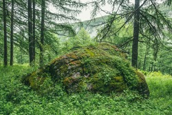 Scenic forest landscape with big mossy stone with green grasses among thickets and trees. Vivid scenery with large boulder with moses and lush vegetation. Green rock with moss and wild flora in forest