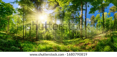Scenic forest of deciduous trees, with blue sky and the bright sun illuminating the vibrant green foliage, panoramic view