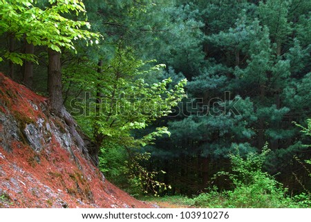 scenic green mountain forest landscape with various trees
