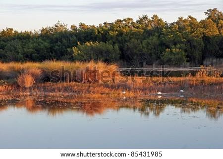 Scenic Landscape Ding Darling Wildlife Refuge Florida