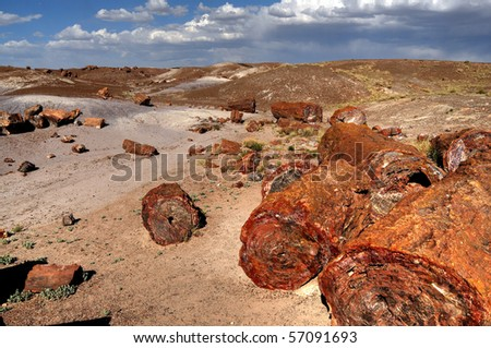 Scenic landscape of ancient petrified trees
