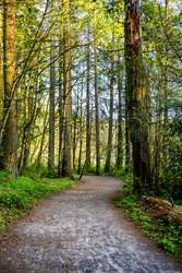 Scenic landscape with a winding hiking trail among the wild forest in Lacamas Washington attracts tourists with amazing routes with ups and downs useful for the full work of cardio vascular system
