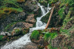 Scenic landscape with beautiful waterfall in forest among rich vegetation. Atmospheric woody scenery with fallen tree trunk in mountain creek. Spring water among wild plants and mosses on rocks.