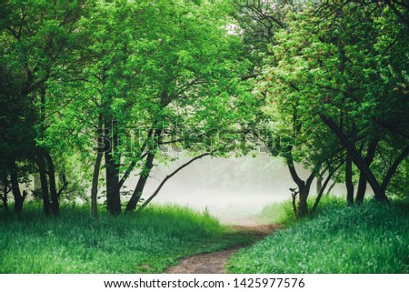 Scenic landscape with lush green foliage. Crow on branch. Raven on tree. Footpath in park in early morning in mist. Scenery with pathway among green grass and leafage. Vivid natural green background. #1425977576